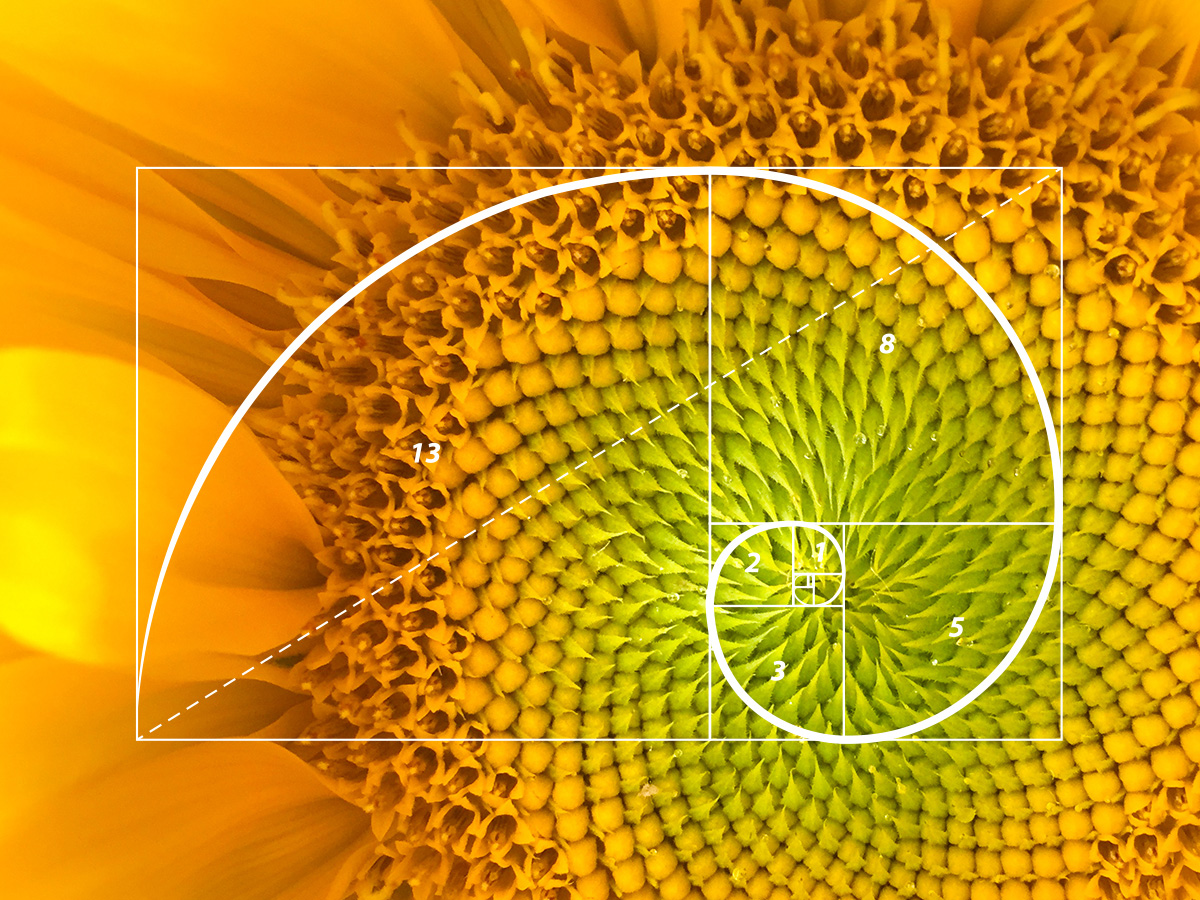 The nature of design: the Fibonacci sequence and the Golden Ratio